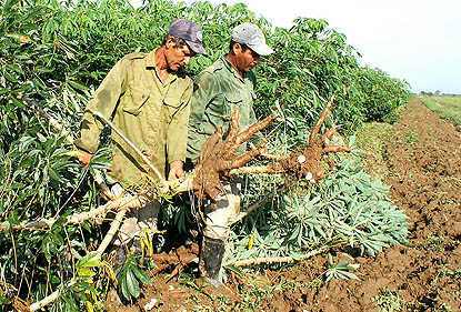 Producción de alimentos, agricultura